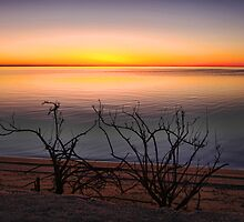Hamelin Pool by Sue  Fellows