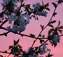 Cherry Blossom Tree by liberthine01