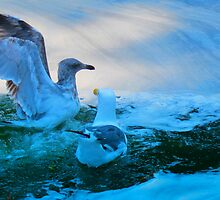 Two Gulls by David Denny