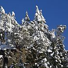 Snow on Mayne Island Cliffs by TerrillWelch