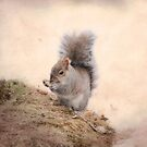 Squirrel-cuteness overload by KathleenRinker