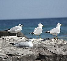 Seagulls Awaiting by JacalynE