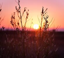 Grass Silhouette with a beautiful sunset by 3523studio