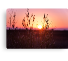 Grass Silhouette with a beautiful sunset Canvas Print