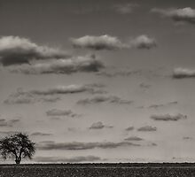 Lonely tree by Bernd F. Laeschke