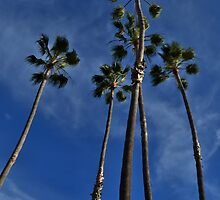 California Palms by seeyoutoo