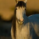 Sunrise Mare by Kent Keller