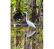 Everglades Photographic Print