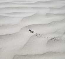 Sand Dune Hopper by kennedywesley