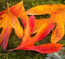 Colorful Fallen Leaves by Kenneth Keifer
