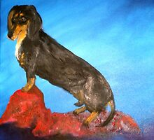 Otis - The Miniature  Dachshund by tusitalo