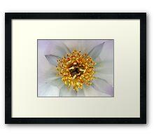 Crown of Pollen  Framed Print