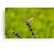 Small White Butterfly On Lavender Canvas Print