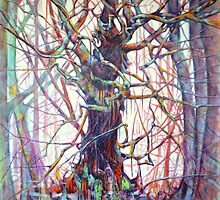 Wood for the Trees by Jacky Murtaugh