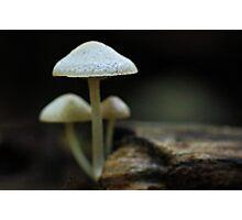 A tiny trio Photographic Print