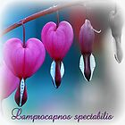 Lamprocapnos spectabilis by ©The Creative  Minds