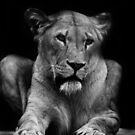 Lions Eyes by liberthine01