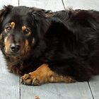 Rufus The Wild Dog by valleygirl