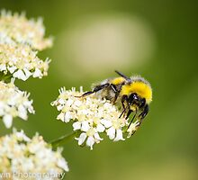 Bee (Macro) by Ben Frewin