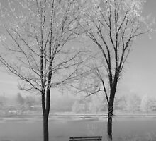 Winterland/bench between twin trees...CANADIAN CULTURE CAPTURED! by inspiREDmaple