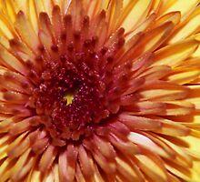 Flourish by Emily Rose