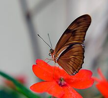 Butterfly Perched on a Flower Closeup — Beautiful Photography Prints and Posters by Erik Anderson