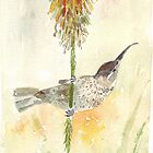 Amethyst Sunbird female by Maree  Clarkson