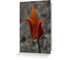A Flamboyant Flame Tulip in a Pebble Garden Greeting Card