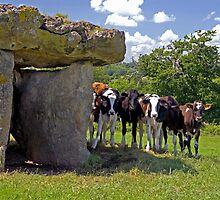 St Lythans Burial Chamber and Curious Cows by Nick Jenkins