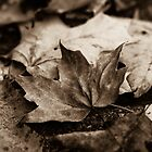 Fallen Leaves  by Lynn Gedeon