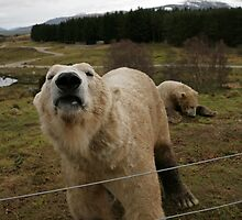 highland Wildlife Park Kincraig Scotland by Keith Larby
