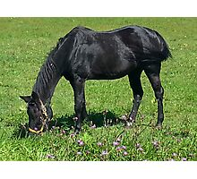 Black Horse Photographic Print