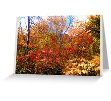 a mess of color Greeting Card