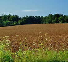 Rural Views 10 by michaelasamples