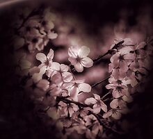 Love blossoms by DerekEntwistle