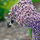 Butterfly on flower by Shellie Phipps