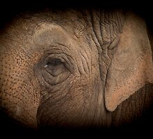 Elephant  by chris2766