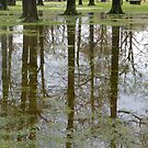 Reflections Of Trees In The Flood by WildestArt