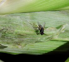Fly On The Corn by WildestArt