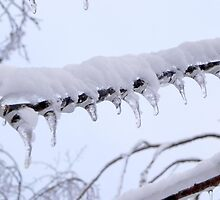 Ice Teeth by Martha Medford