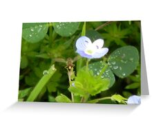 The Tiniest Bee Ever -View Larger Greeting Card