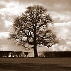 Hedgerow Tree by mikebov