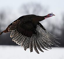 turkey taken off by George  Close