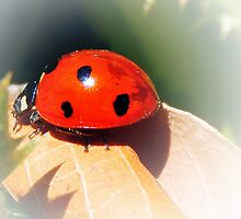 RED WITH BLACK SPOTS by Sandra  Aguirre