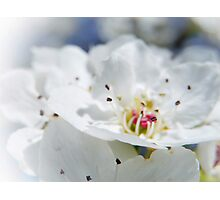 SWEET DAYS AND BLOSSOMS Photographic Print