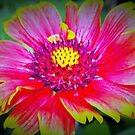 Blanket flower macro by ♥⊱ B. Randi Bailey