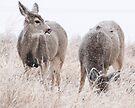 Snowy Deer by Eivor Kuchta