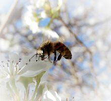 BUZZY BEE by Sandra  Aguirre