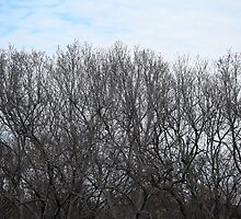 A Touch Of Blue Above Trees by Cora Wandel