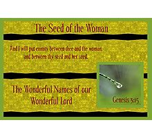 The Seed of the Woman Photographic Print